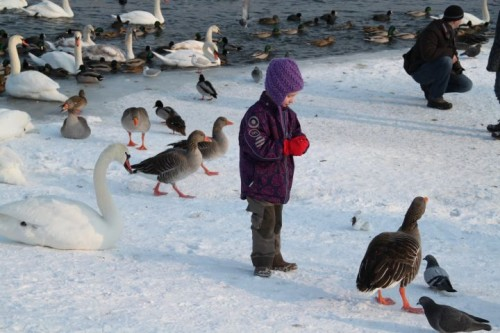 dresden,allemagne,saxe,elbe,balade,promenade,neige,givre,glace,animaux,blaues wunder